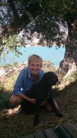 Foto 6 Spanischer  Wasserhund  perro de agua  Familienzucht reinrassig