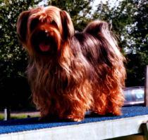 Foto 2 Spaß für Hunde in den Ferien – Hundepension Stuttgart WN GP BB – Hundehotel 5 Sterne