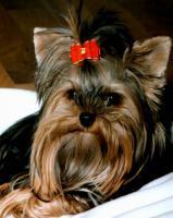Foto 3 Spaß für Hunde in den Ferien – Hundepension Stuttgart WN GP BB – Hundehotel 5 Sterne