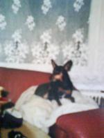Foto 2 Spende für kleinen, sehr kranken Hund
