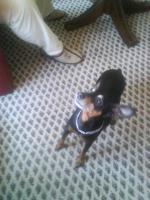 Foto 3 Spende für kleinen, sehr kranken Hund
