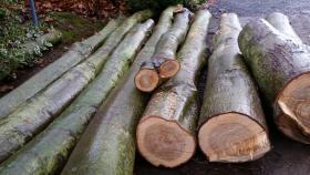 Stammholz Baumstämme Rundstämme