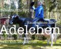 Stell Dir vor Du hast in der Schweiz ein Haus … und Du möchtest Eine Holstein - Friesian Deko Kuh dahin geliefert haben wolln…  ???