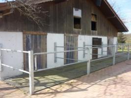 Foto 4 Stellplatz inkl. Paddock und Pferdekoppel zu vermieten