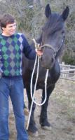 Foto 2 Stute mit Fohlen zu verkaufen