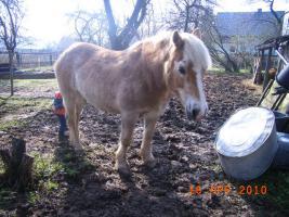 Foto 3 Suche ein Beistellpferd für geschenkt bzw. sehr wenig Geld
