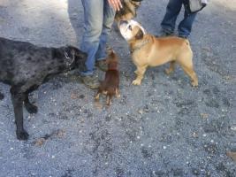 Suche Hundefamilie zum Sharing