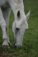 Suche Offenstallplatz für Rentnerpferd (22-jähr. Holsteinerwallach)