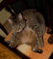 Suche Pflegestelle für meine Katzenoma