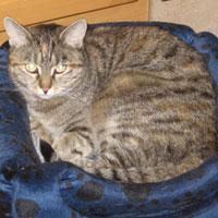 Foto 2 Suche Pflegestelle für meine Katzenoma