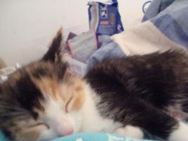 Suche Rotes KatzenBaby 8-12 Wochen alt