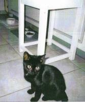 Suche kurzzeitige Pflegefamilie für meine beiden Kätzchen