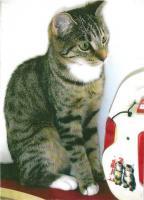 Foto 2 Suche kurzzeitige Pflegefamilie für meine beiden Kätzchen