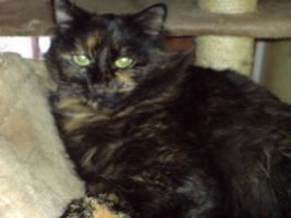 Suche liebevolles zu Hause für Katzen Geschwister-Paar