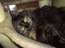 Foto 2 Suche liebevolles zu Hause für Katzen Geschwister-Paar