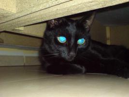 Foto 3 Suche liebevolles zu Hause für Katzen Geschwister-Paar