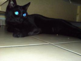 Foto 4 Suche liebevolles zu Hause für Katzen Geschwister-Paar