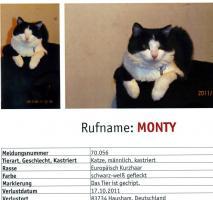 Foto 4 Suche meinen Kater Monty.