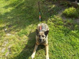 Foto 2 Suche ein neues zu Hause für einen Hund