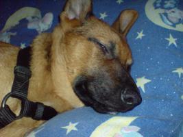 Foto 2 Suche ein neues liebevolles zu Hause f�r meinen R�uber