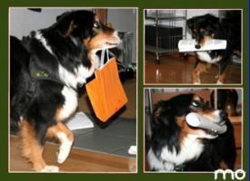 Foto 3 Suche - Trainingsplatz f�r die TEAMSCHULE ''Mensch - Hund''