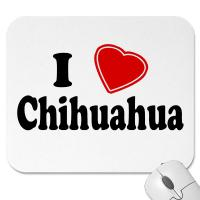 Foto 2 Suchen Chihuahua