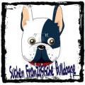 Suchen Welpe Französische Bulldogge ab August