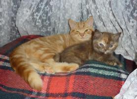 Carlo und Dotti