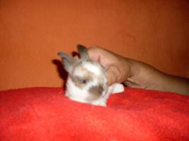 Foto 6 S�sse Havanna-Babys