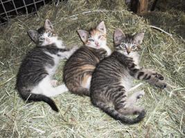 Süße Kätzchen abzugeben
