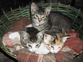 Foto 2 Süße Kätzchen abzugeben