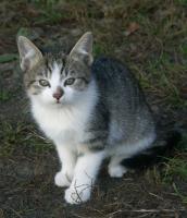 Süße Kätzchen zu vergeben!
