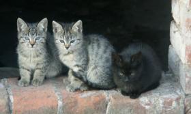 Foto 2 Süße Kätzchen zu vergeben!
