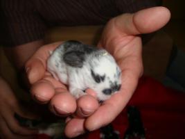 Foto 4 Süße Kaninchen abzugeben