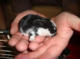 Foto 8 Süße Kaninchen abzugeben