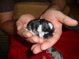 Foto 9 Süße Kaninchen abzugeben