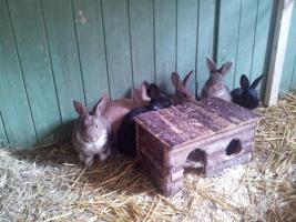 Süße Kaninchen suchen ein neues zuhause!