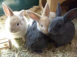 S��e Kaninchenbabys