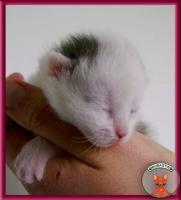Foto 3 Süße Katzenbabys suchen ein liebevolles Zuhause