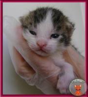 Foto 4 Süße Katzenbabys suchen ein liebevolles Zuhause