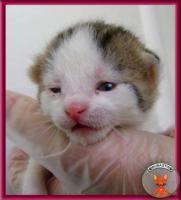 Foto 6 Süße Katzenbabys suchen ein liebevolles Zuhause
