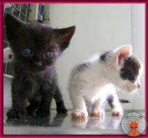 Foto 7 Süße Katzenbabys suchen ein liebevolles Zuhause