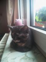 Süße Katzenbabys suchen ein neues zuhause