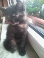 Foto 2 Süße Katzenbabys suchen ein neues zuhause