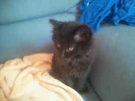 Foto 3 Süße Katzenbabys suchen ein neues zuhause