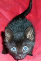 S��e Katzenkinder (8 Wochen) suchen ein liebevolles Zuhause