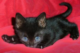 Foto 2 S��e Katzenkinder (8 Wochen) suchen ein liebevolles Zuhause