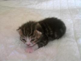 Süße Katzenkitten abzugeben!