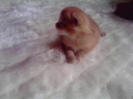 Foto 2 Süße Katzenkitten abzugeben!