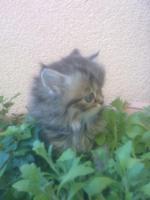 Foto 5 S�sse Perserbabys